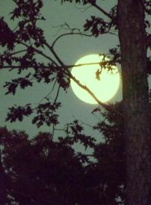 Moon 038